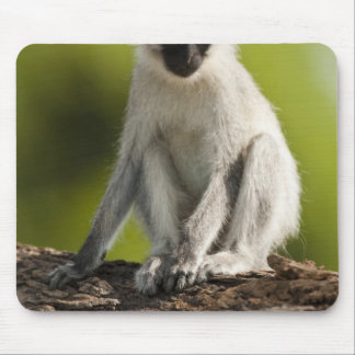Samburu Game Reserve, Kenya, Vervet Monkey, Mouse Pad