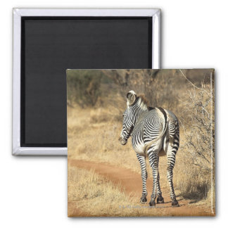 Samburu National Reserve, Kenya Fridge Magnets