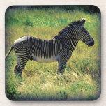Samburu Zebra Coasters