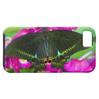Sammamish, borboleta tropical de Washington iPhone SE/5/5s Case