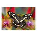Sammamish, mariposa tropical 15 de Washington Fotografía