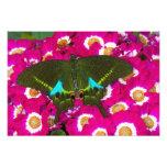 Sammamish, mariposa tropical 15 de Washington Fotografias