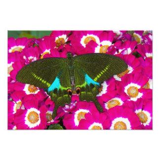 Sammamish mariposa tropical 15 de Washington Fotografias