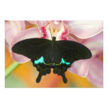 Sammamish, mariposa tropical 19 de Washington Fotografías