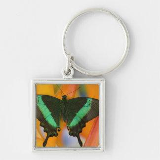 Sammamish, mariposa tropical 19 de Washington Llavero Cuadrado Plateado