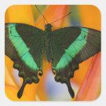 Sammamish, mariposa tropical 19 de Washington Pegatina Cuadrada