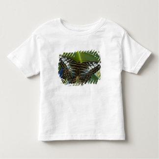 Sammamish, mariposa tropical 22 de Washington Playera De Bebé