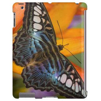 Sammamish, mariposa tropical 24 de Washington