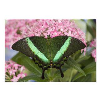 Sammamish mariposa tropical 24 de Washington Arte Con Fotos