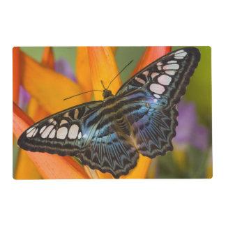 Sammamish, mariposa tropical 24 de Washington Tapete Individual
