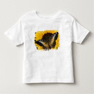 Sammamish, mariposa tropical 27 de Washington Polera