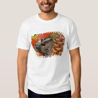 Sammamish, mariposa tropical 2 de Washington Camisas