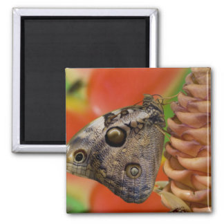 Sammamish, mariposa tropical 2 de Washington Iman De Nevera