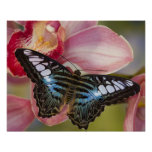Sammamish, mariposa tropical 2 de Washington Poster