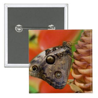 Sammamish, mariposa tropical 2 de Washington Pin Cuadrada 5 Cm