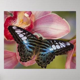Sammamish, mariposa tropical 2 de Washington Póster