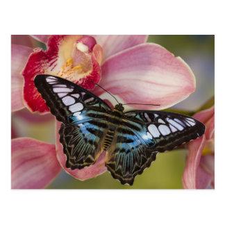 Sammamish, mariposa tropical 2 de Washington Tarjetas Postales