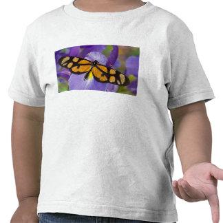 Sammamish, mariposa tropical 34 de Washington Camiseta