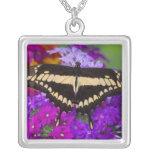 Sammamish, mariposa tropical 36 de Washington Colgante Cuadrado