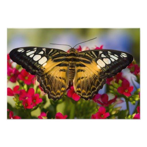 Sammamish, mariposa tropical 36 de Washington Fotografías