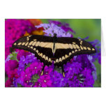 Sammamish, mariposa tropical 36 de Washington Tarjeta De Felicitación