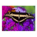 Sammamish, mariposa tropical 36 de Washington Tarjeta Postal