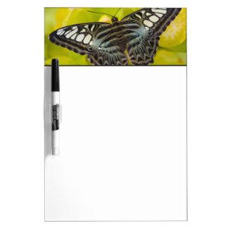 Sammamish, mariposa tropical 38 de Washington Tablero Blanco