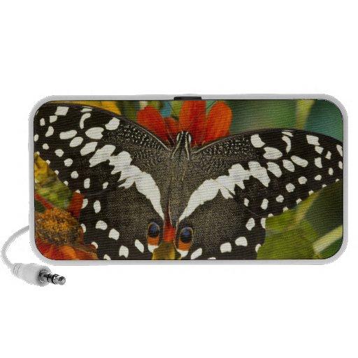Sammamish, mariposa tropical 39 de Washington Altavoces