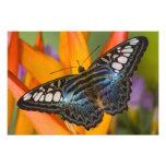 Sammamish, mariposa tropical 39 de Washington Fotografías