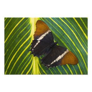 Sammamish, mariposa tropical 39 de Washington Impresiones Fotograficas