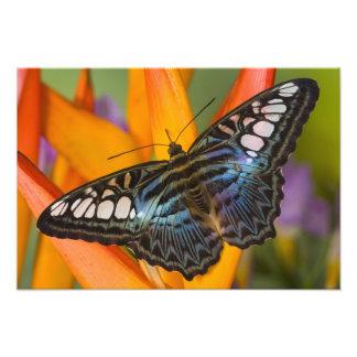 Sammamish, mariposa tropical 39 de Washington Fotografía