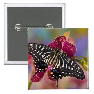 Sammamish, mariposa tropical 3 de Washington Pin Cuadrada 5 Cm
