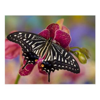 Sammamish, mariposa tropical 3 de Washington Tarjetas Postales