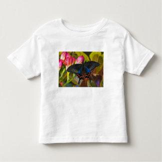 Sammamish, mariposa tropical 40 de Washington Camisas