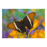 Sammamish, mariposa tropical 40 de Washington Foto