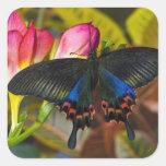 Sammamish, mariposa tropical 40 de Washington Calcomanía Cuadradas