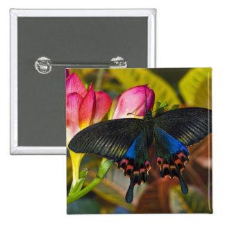 Sammamish, mariposa tropical 40 de Washington Pin Cuadrada 5 Cm