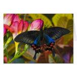 Sammamish, mariposa tropical 40 de Washington Tarjetas