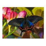 Sammamish, mariposa tropical 40 de Washington Tarjetas Postales