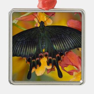 Sammamish, mariposa tropical 42 de Washington Adorno Navideño Cuadrado De Metal
