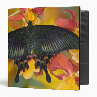 "Sammamish, mariposa tropical 42 de Washington Carpeta 1 1/2"""