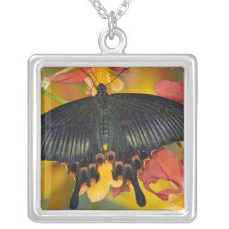 Sammamish, mariposa tropical 42 de Washington Colgante Cuadrado