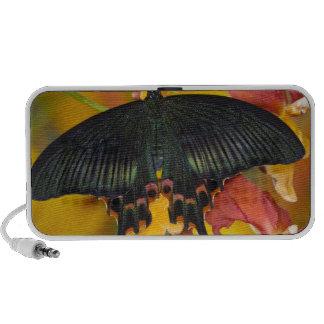 Sammamish, mariposa tropical 42 de Washington Laptop Altavoz