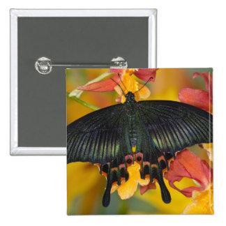 Sammamish, mariposa tropical 42 de Washington Pin Cuadrado