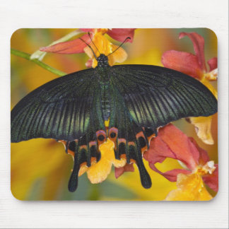 Sammamish, mariposa tropical 42 de Washington Tapete De Raton