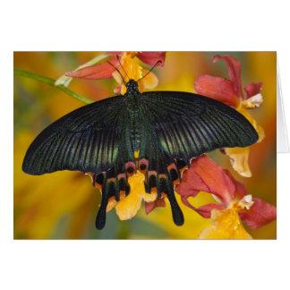 Sammamish, mariposa tropical 42 de Washington Tarjeta De Felicitación