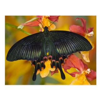 Sammamish, mariposa tropical 42 de Washington Tarjetas Postales