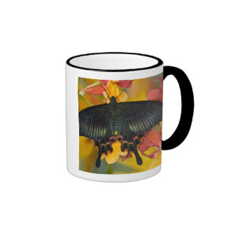 Sammamish, mariposa tropical 42 de Washington Taza De Dos Colores
