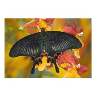 Sammamish, mariposa tropical 4 de Washington Fotografías