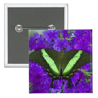 Sammamish, mariposa tropical 4 de Washington Pin